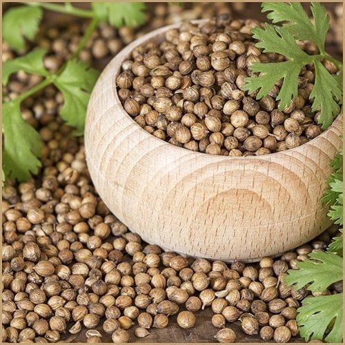 coriander seed infused olive oil