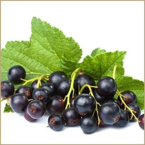 Blackcurrant Balsam Vinegar