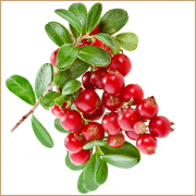 lingonberry balsam vinegar
