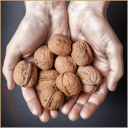 handful of walnuts in shells
